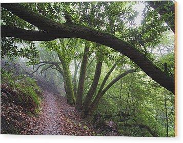 Hiking Huckleberry Wood Print by Hugh Stickney