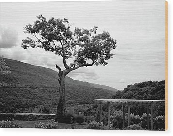 Hildene Tree 5689 Wood Print