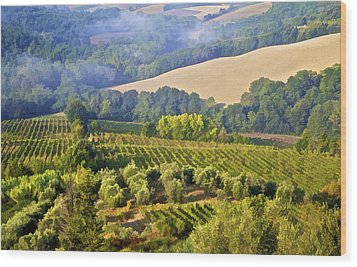 Hills Of Tuscany Wood Print by David Letts