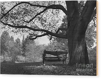 Hillsdale College Slayton Arboretum Wood Print by University Icons