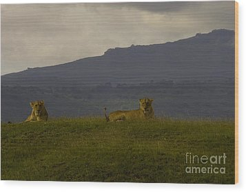 Wood Print featuring the photograph Hillside Lions by J L Woody Wooden