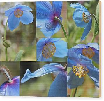 Himalayan Blue Poppy Collage Wood Print by Jennie Marie Schell