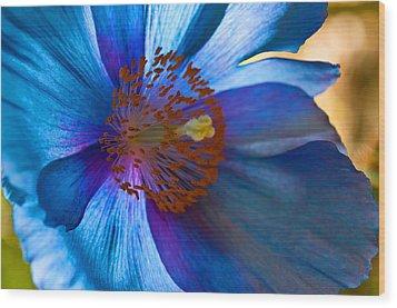 Himalayan Blue Poppy IIi Wood Print