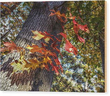 Hints Of Fall Wood Print by Linda Unger
