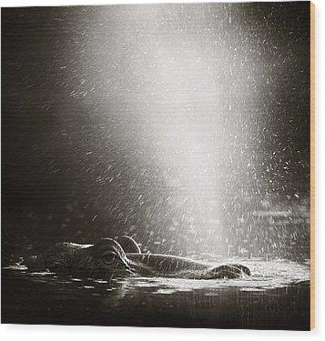 Hippo Blowing  Air Wood Print by Johan Swanepoel
