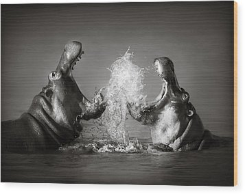 Hippo's Fighting Wood Print by Johan Swanepoel