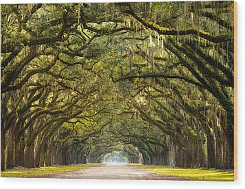 Historic Wormsloe Plantation Oak Trees Wood Print