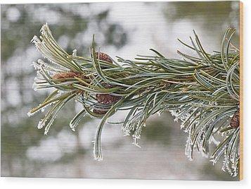 Hoar Frost Wood Print by Steven Ralser