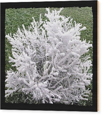 Hoarfrost 20 Wood Print by Will Borden