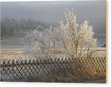 Hoarfrost In Winter Wood Print by Matthias Hauser