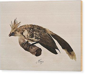 Hoatzin Wood Print by Rachel Root