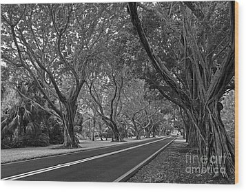 Hobe Sound Bridge Rd. West II Wood Print by Larry Nieland
