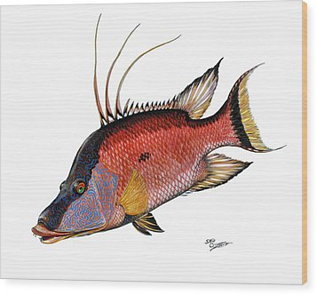 Hogfish On White Wood Print by Steve Ozment