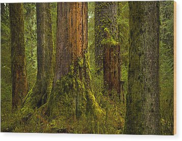 Hoh Rainforest 1 Wood Print