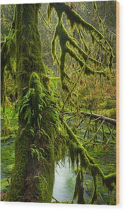 Hoh Rainforest 2 Wood Print