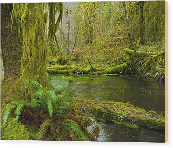 Hoh Rainforest 3 Wood Print