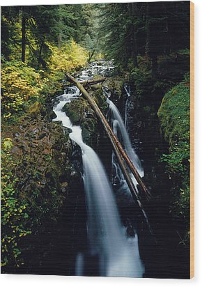 Hoh Rainforest Wood Print