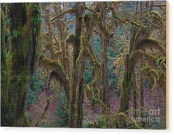 Hoh Rainforest, Olympic National Park Wood Print by Mark Newman