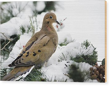 Holiday Dove Wood Print by Christina Rollo