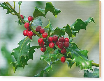 Holly Berries Wood Print by Sharon Talson