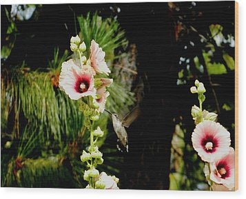 Hollyhock Heaven Wood Print