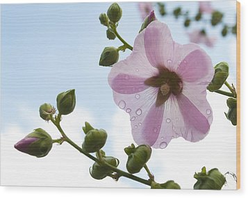 Wood Print featuring the photograph Hollyhock With Raindrops by Lana Enderle