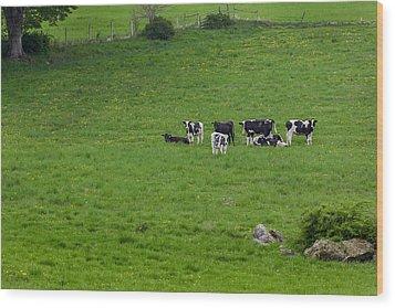 Holsteins Wood Print by Bill Wakeley