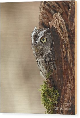 Home Sweet Home - Eastern Screech Owl In A Hollow Tree Wood Print by Inspired Nature Photography Fine Art Photography