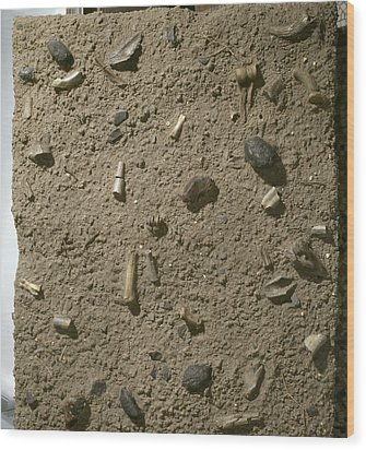 Homo Habilis Fossil Bed Wood Print by Science Photo Library