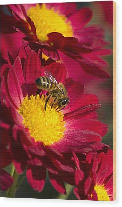 Honey Bee And Chrysanthemum Wood Print by Christina Rollo