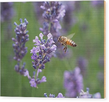 Honey Bee And Lavender Wood Print by Rona Black