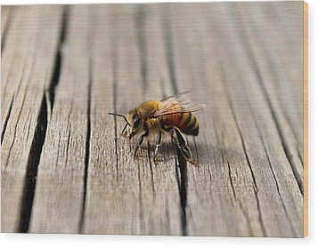 Wood Print featuring the photograph Honey Bee Beauty Shot by Candice Trimble