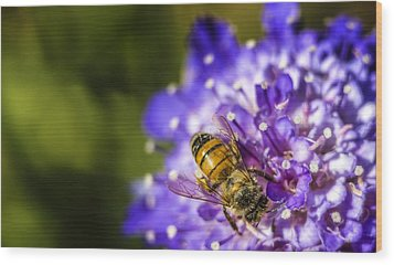 Honey Bee Wood Print by Caitlyn  Grasso