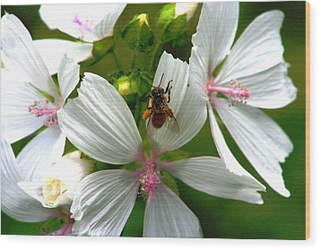 Honey Bee In The Mallow Wood Print