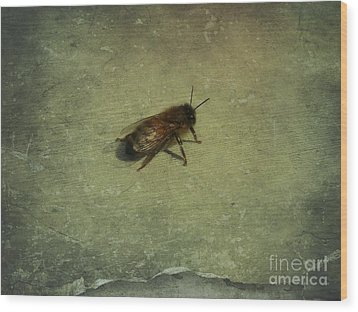 Wood Print featuring the photograph Honey Bee by Kristine Nora