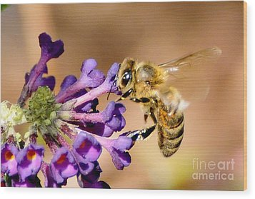Honey Bee On Butterfly Bush Wood Print by Jean A Chang