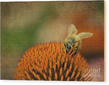 Honey Bee On Flower Wood Print by Dan Friend