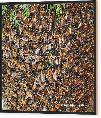 Wood Print featuring the photograph Honey Bee Swarm by Tom Janca