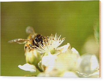 Honey Bee Two Wood Print by Joshua Ward
