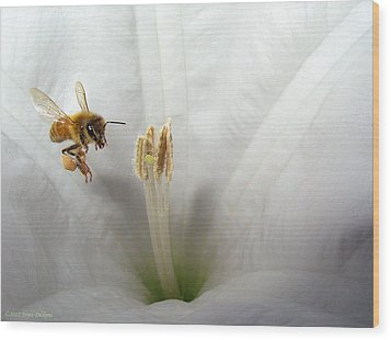 Honey Bee Up Close And Personal Wood Print by Joyce Dickens