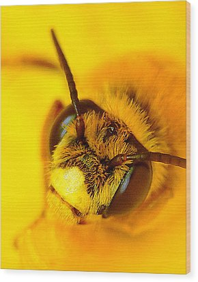 Honey Bee Yellow Wood Print by Chris Fraser