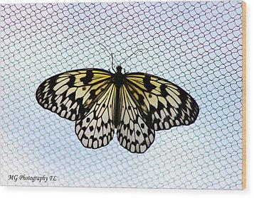 Honeycomb Wood Print