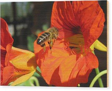 Honeybee Entering Nasturtium Wood Print