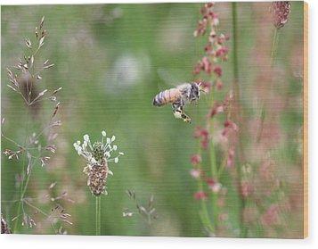 Honeybee Flying In A Meadow Wood Print