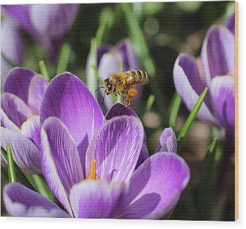 Honeybee Flying Over Crocus Wood Print