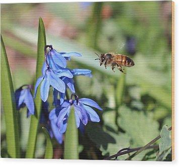 Honeybee In Flight Wood Print