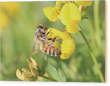 honeybee on Birdsfool Trefoil Wood Print