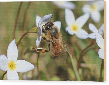 Honeybee On Bluet Wood Print