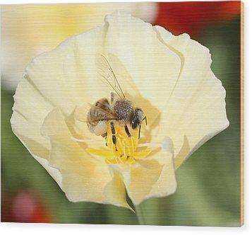 Honeybee On Cream Poppy Wood Print