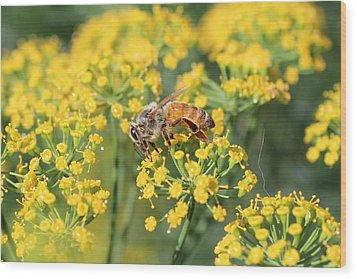 Honeybee On Dill Wood Print